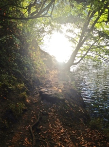 Hiking at Lake Anza in Tilden Park