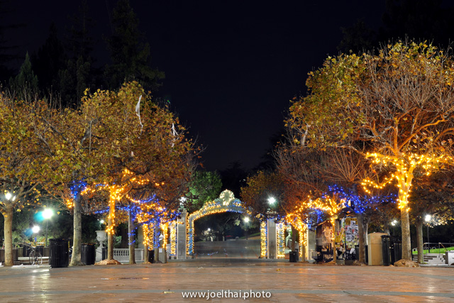 Blue & Gold Sather Gate Trees. Click to enlarge. http://joelthai.photo